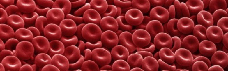 Picture of platelets.
